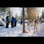 Finnish Lapland with Helsinki and Stockholm 11 days/10 nights 34