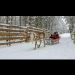 Finnish Lapland with Helsinki and Stockholm 11 days/10 nights 15