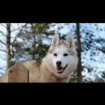 Finnish Lapland with Helsinki and Stockholm 11 days/10 nights 32