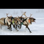 Finnish Lapland with Helsinki and Stockholm 11 days/10 nights 14