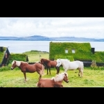 Adventure in the Feroe Islands - 6 days/5 nights    Fly and Drive 22