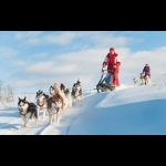 Lapland Experience of Finland in Kakslauttanen 5 days/4 nights 26