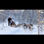 Lapland Experience of Finland in Kakslauttanen 5 days/4 nights 21