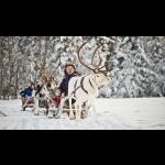 Scandinavian Capitals  with Lapland Cph-Sto 15 days/14 nights 57