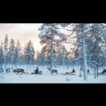 Scandinavian Capitals  with Lapland Cph-Sto 15 days/14 nights 56