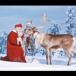 Lapland Experience of Finland in Kakslauttanen 5 days/4 nights 11