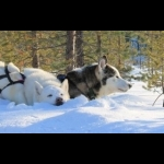 Scandinavian Capitals  with Lapland Cph-Sto 15 days/14 nights 53